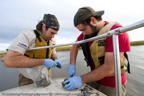 Michael and Paul processing oyster samples